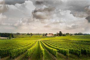 Paysage Viticole Photos paysages viticoles dans l'entre deux mers. Viggnoble Bordelais.  -